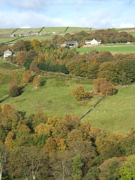 Autumn trees, Luddenden Dean
