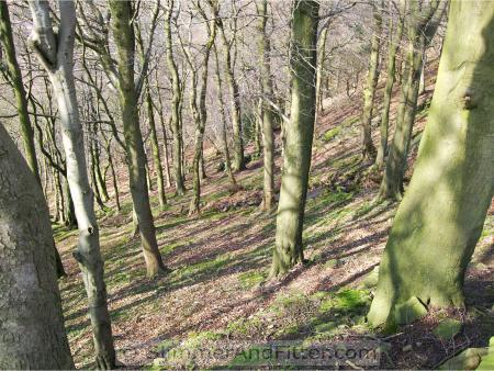 Looking down into Callis Wood