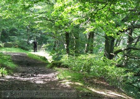 Bridleway through Crow Nest Wood