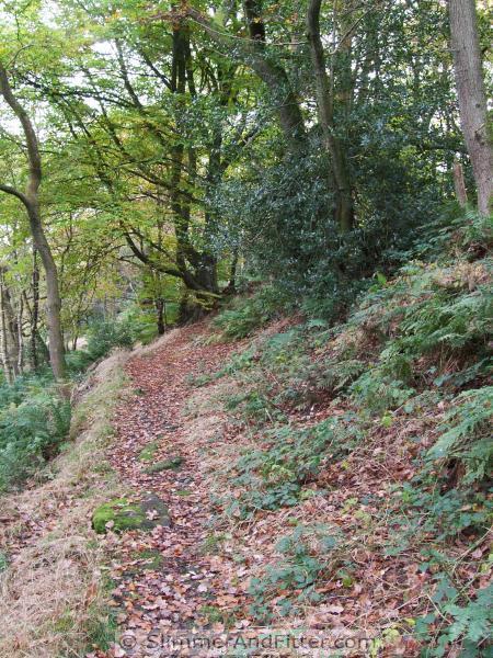 Fallen leaves, autumn wood