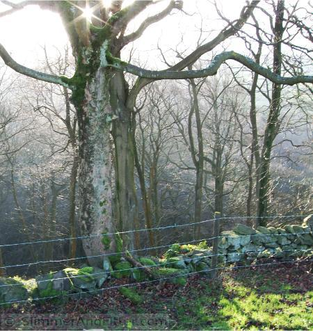 Sun shining through Foster Wood