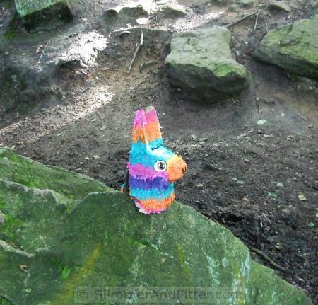 Llamas rock!