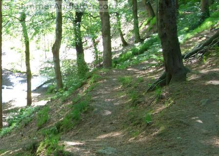 Footpath through Nutclough Woods