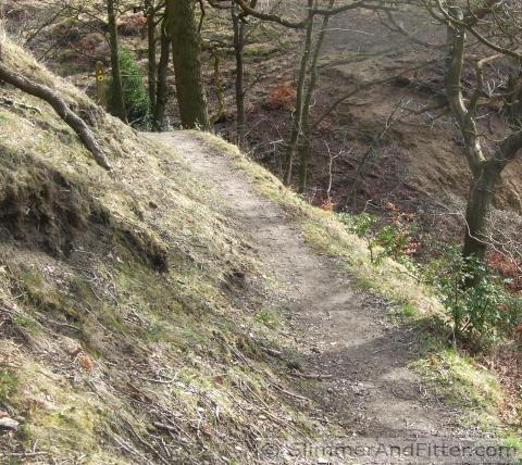 Burlees Wood footpath