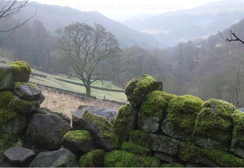 Murky view of the valley below Lumb Bank