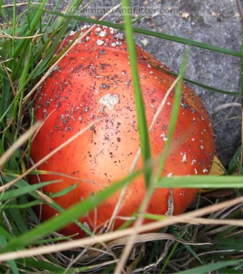 Fearsome fungi #2