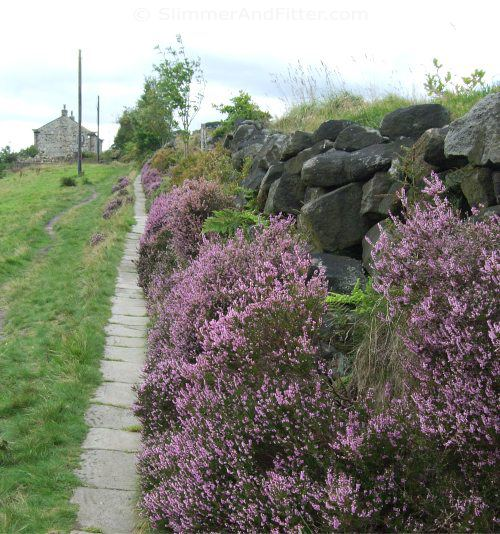 Heather by footpath
