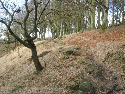 Horsehold Wood footpath