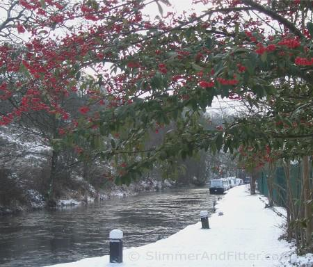 Red berries, ice and snow