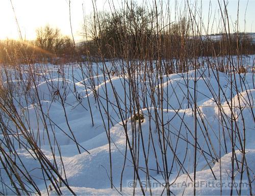 A snowy field in sunshine