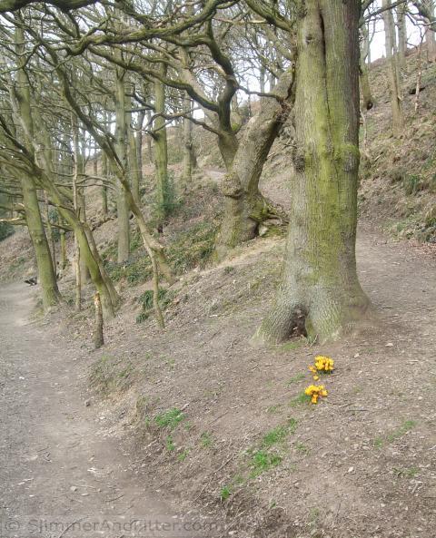 Spring flowers Burlees Wood