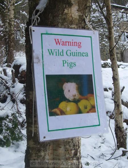 Attack Guinea Pigs!